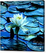 White Lily Acrylic Print by Maria Scarfone
