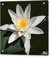 My White Lotus Acrylic Print