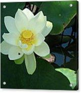 White Lotus I Acrylic Print