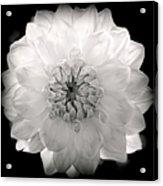 White Magic Acrylic Print by Karen Wiles