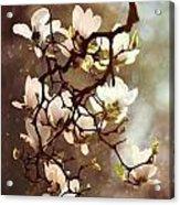 White Magnolias Acrylic Print