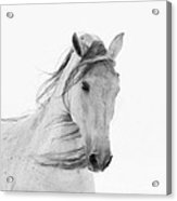 White Mare In The Snow Acrylic Print