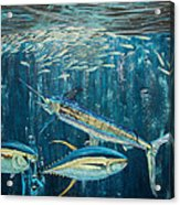 White Marlin Original Oil Painting 24x36in On Canvas Acrylic Print by Manuel Lopez