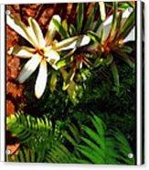 White Maui Flowers Acrylic Print