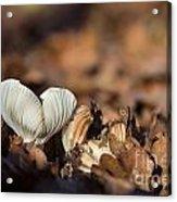 White Mushroom Long Gills Acrylic Print