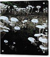 White Mushrooms Amazon Jungle Brazil 1 Acrylic Print
