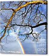 White Oak And Double Rainbow Acrylic Print by Thomas R Fletcher