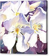 White Oleander Acrylic Print