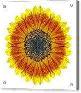 Orange And Yellow Sunflower I Flower Mandala White Acrylic Print