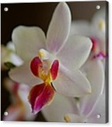 White Orchid Close Acrylic Print
