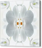 White Orchid Flower Acrylic Print