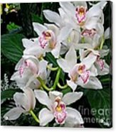 White Orchid In Full Bloom Acrylic Print