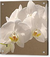 White Orchid Photograph Acrylic Print