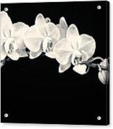 White Orchids Monochrome Acrylic Print by Adam Romanowicz