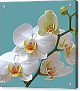 White Orchids On Ocean Blue Acrylic Print