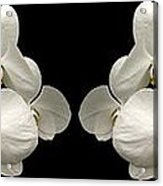 White Orchids Panorama Acrylic Print