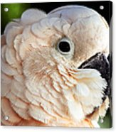 White Parrot Acrylic Print