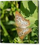 White Peacock Butterfly Acrylic Print
