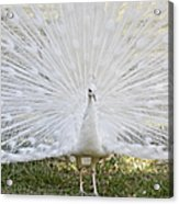 White Peacock - Fountain Of Youth Acrylic Print
