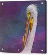 White Pelican Acrylic Print by Hazel Billingsley