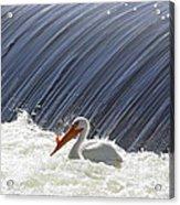 White Pelican Over The Dam Acrylic Print