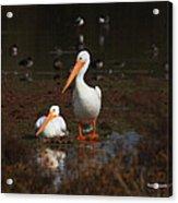 White Pelican Visitors To Gilbert Arizona Acrylic Print