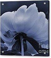 White Peon Acrylic Print