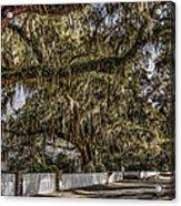 White Picket Fences Acrylic Print
