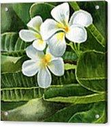 White Plumeria Flowers Acrylic Print