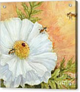 White Poppy And Bees Acrylic Print