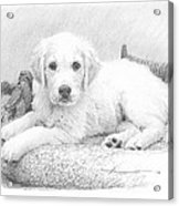 White Puppy Pencil Portrait Acrylic Print