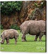 White Rhino 11 Acrylic Print