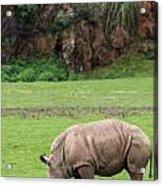 White Rhino 14 Acrylic Print