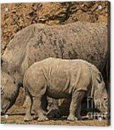 White Rhino 4 Acrylic Print