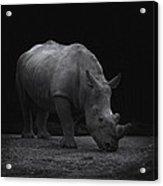 White Rhinocero Acrylic Print