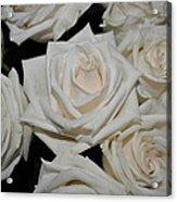 White Rose 1 Acrylic Print