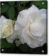 White Rose And Raindrops Acrylic Print
