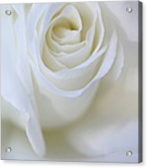 White Rose Floral Whispers Acrylic Print