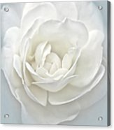 White Rose Flower Silver Blue Acrylic Print