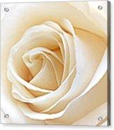 White Rose Heart Acrylic Print