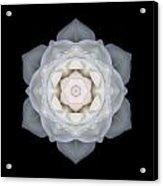 White Rose I Flower Mandala Acrylic Print