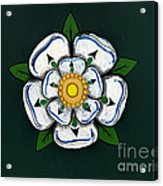White Rose Of York Acrylic Print