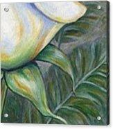 White Rose One Panel Four Of Four Acrylic Print