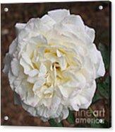 White Rose Square Acrylic Print