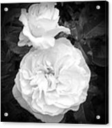 White Rose You Are Heavenly Acrylic Print