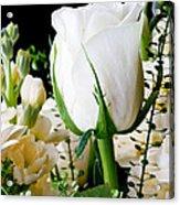 White Roses Close Up Acrylic Print