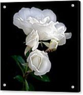 White Roses In The Moonlight Acrylic Print