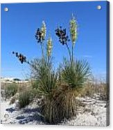White Sands Dune With Soap Yucca Acrylic Print