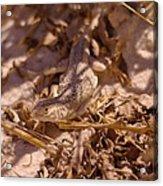 White Sands Lizard Acrylic Print