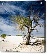 White Sands National Monument #1 Acrylic Print